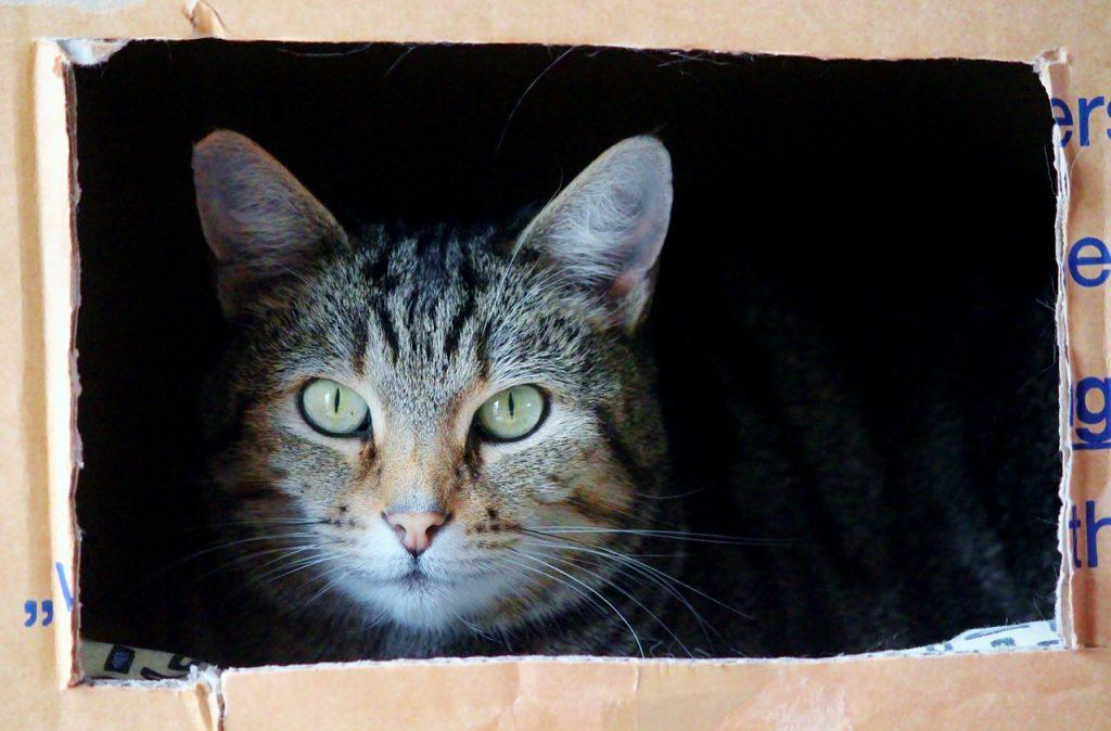 gato organizar mudanza